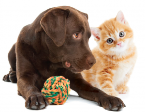 earthy_pawz_dog_and_cat_with_toy-300x231